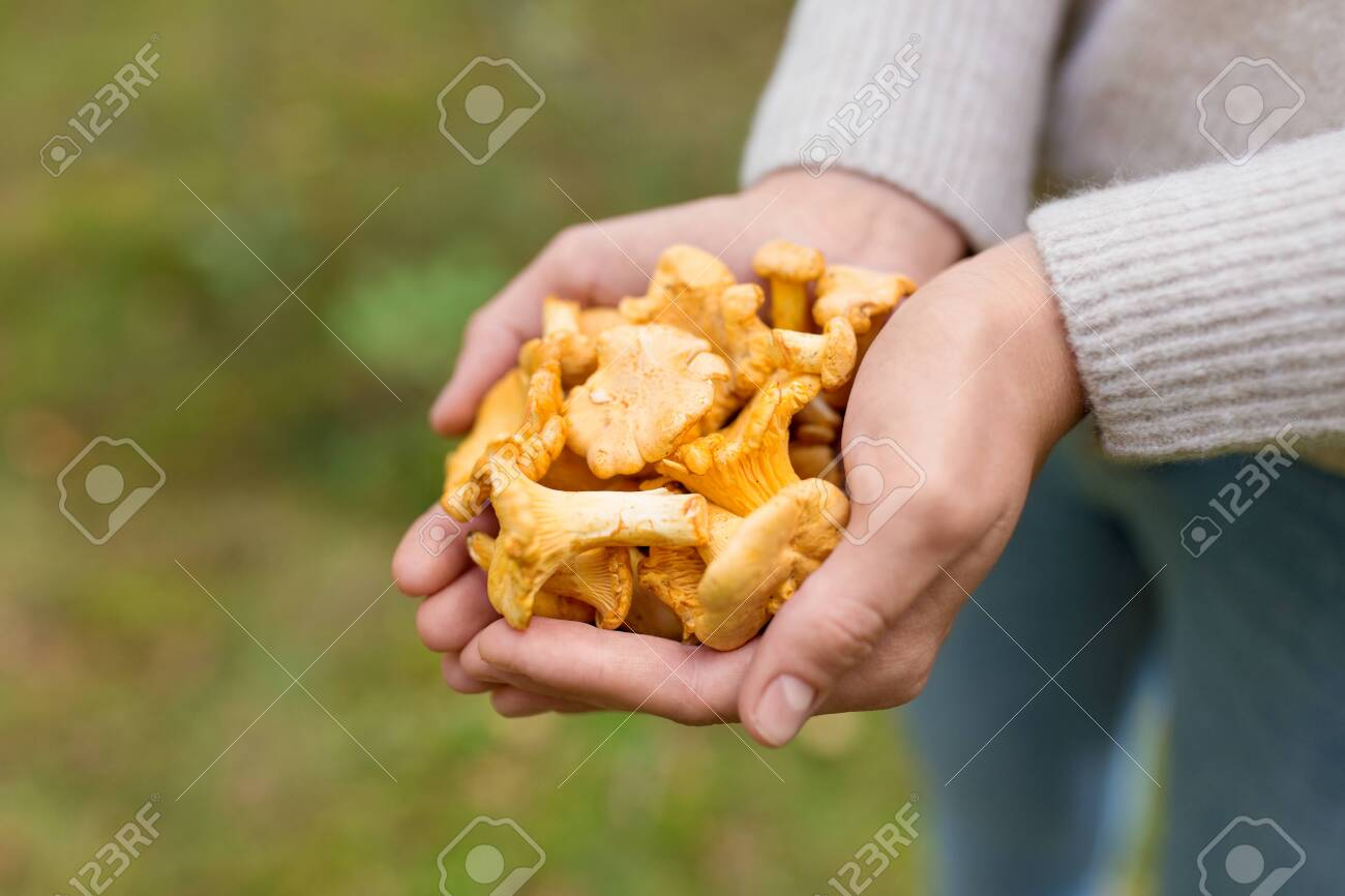 Close up of woman hands with mushrooms in forest - 126006085