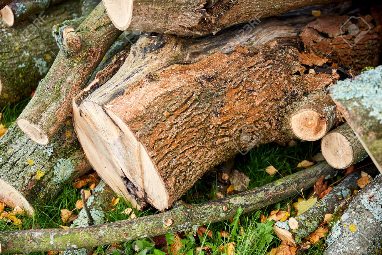 trunks of felled trees or logs outdoors in autumn - 169972363