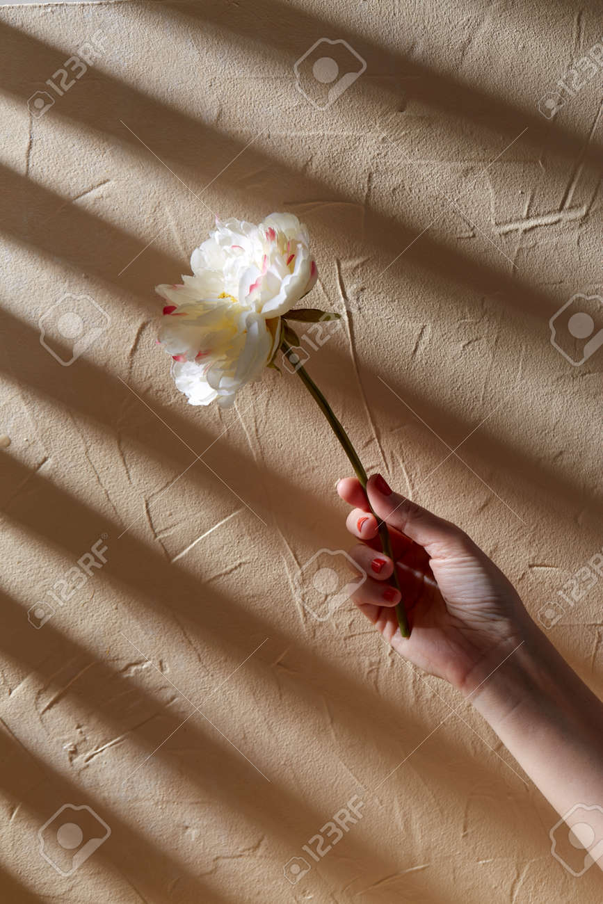 hand holding white flower over beige background - 169965973