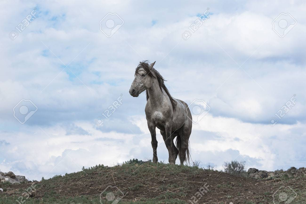 A Lonely White Wild Horse Stock Photo Picture And Royalty Free Image Image 84163287