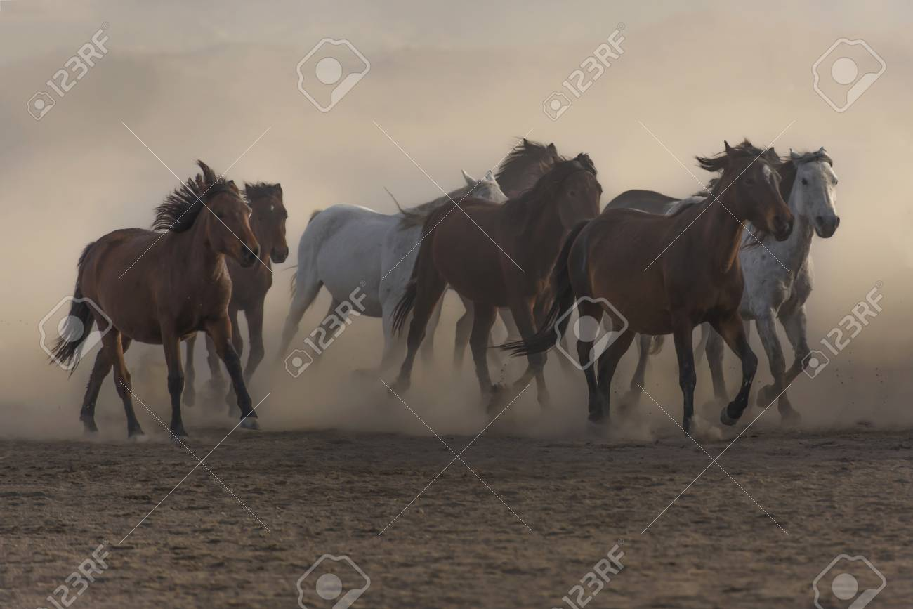 running horses freedom stock photo picture and royalty free image