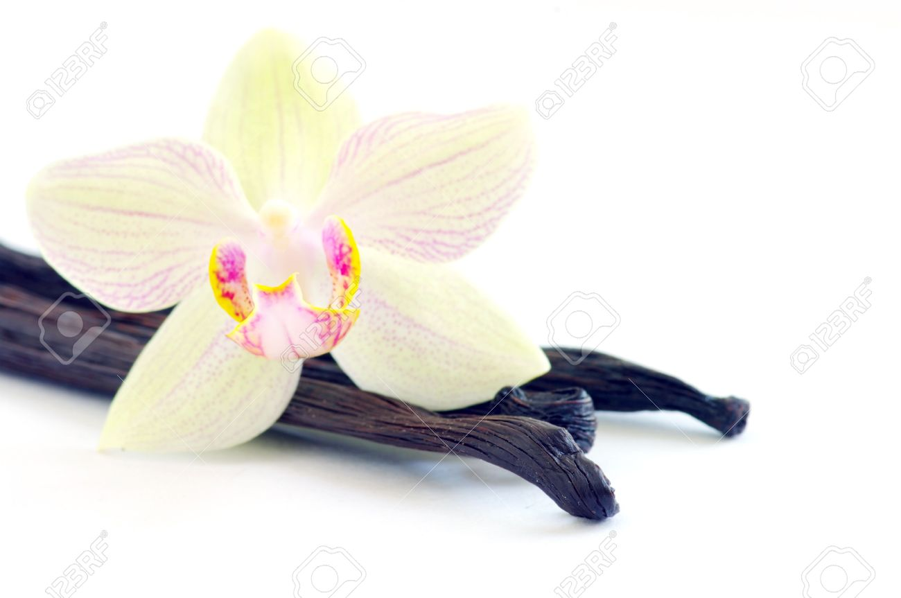 Orchid with vanilla beans on white background Stock Photo - 5513690