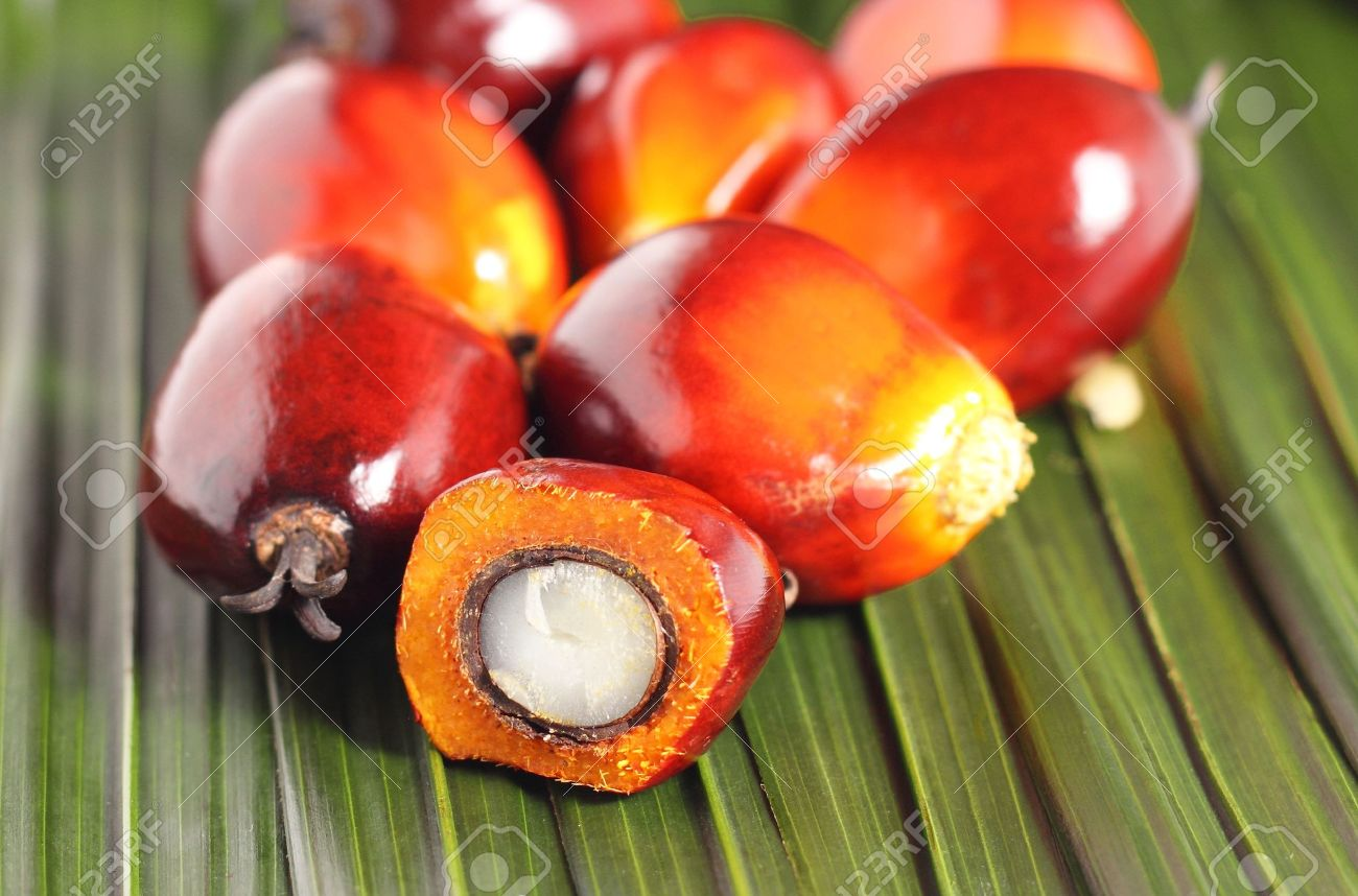 Cut fresh oil palm fruits on the leaves background Stock Photo - 20329063