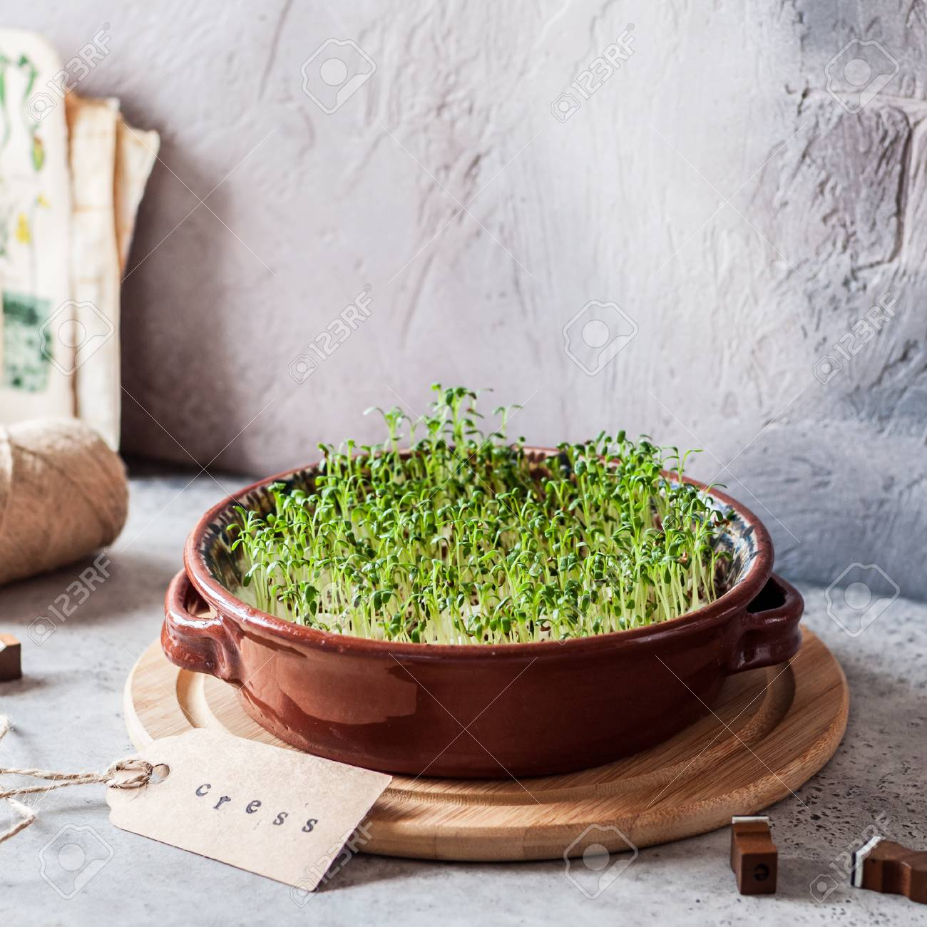 Growing Micro Greens, Sprouting Cress Salad Seeds - 121955047