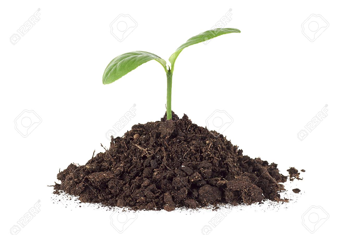 Small Plant On Pile Of Soil, White Background Stock Photo, Picture ...