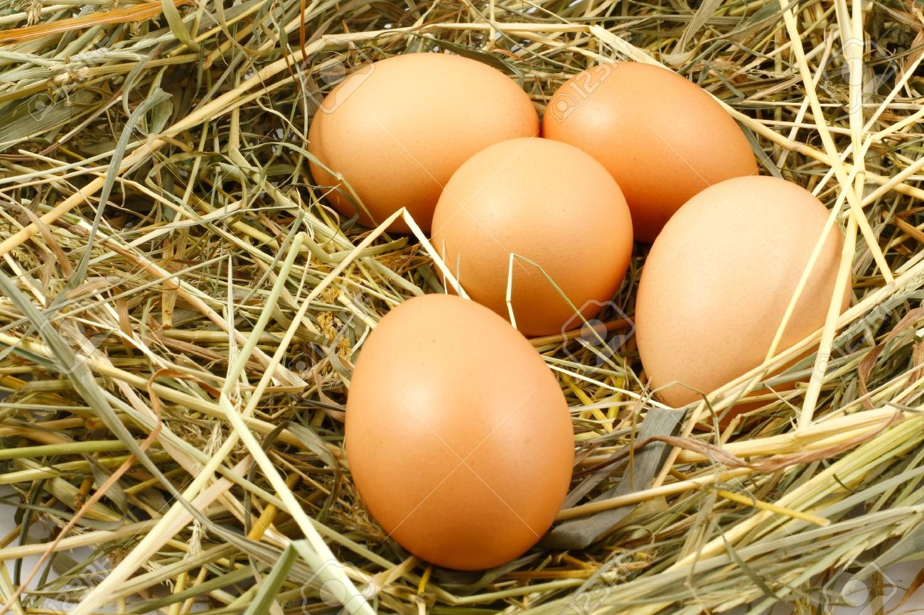 Eggs in the nest Stock Photo - 6728110