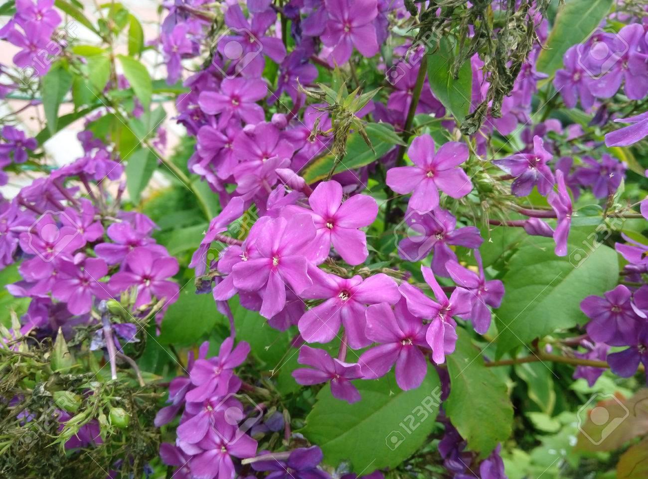 Fleurs, Fleur, Violet, Champ, Prairie, Jardin, Plate-bande, Arrière ...