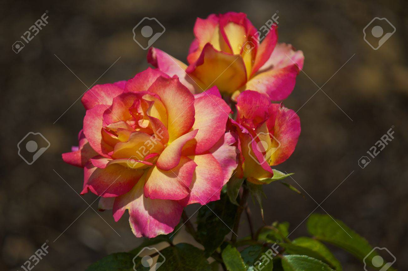 Two blooms in a botanical park - 14354183