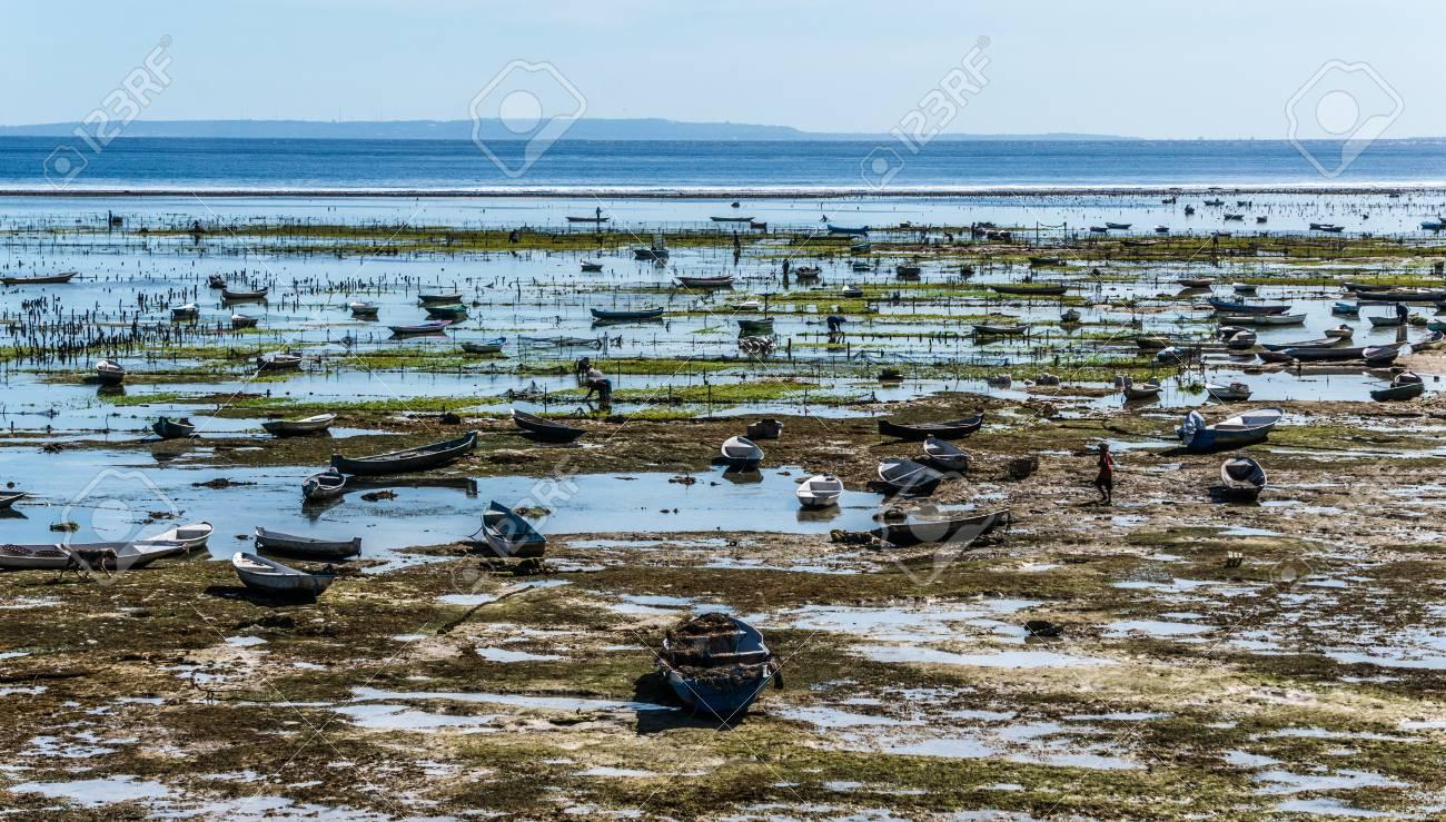 Seaweed farming at low tide on the Nusa Lembongan Island