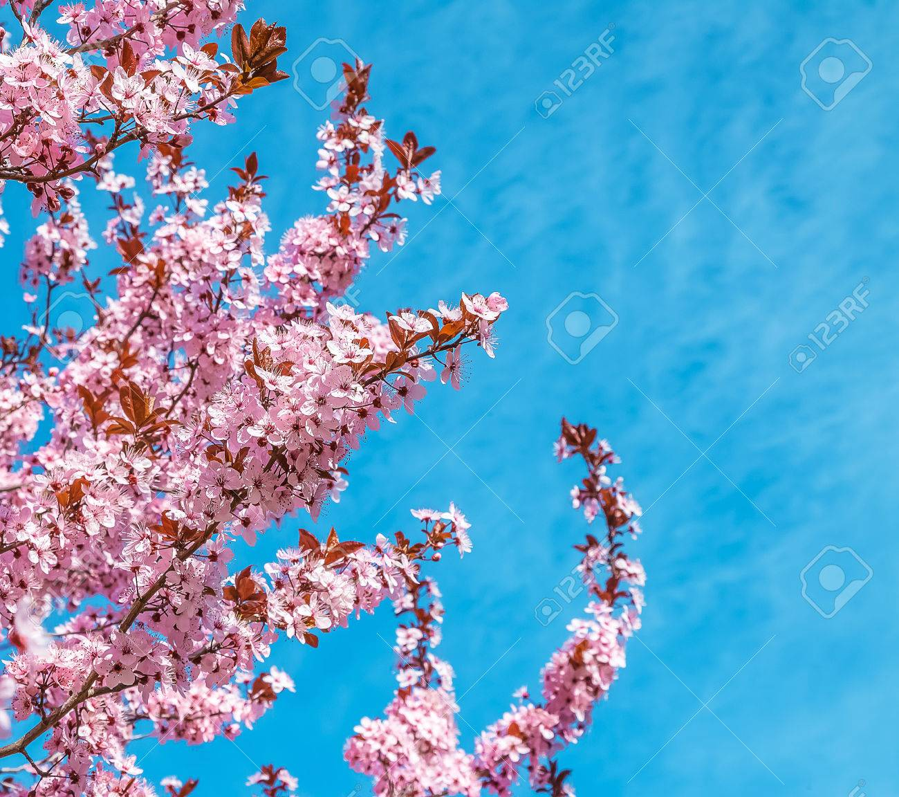 Spring Tree With Pink Flowers Almond Blossom On A Branch On Green