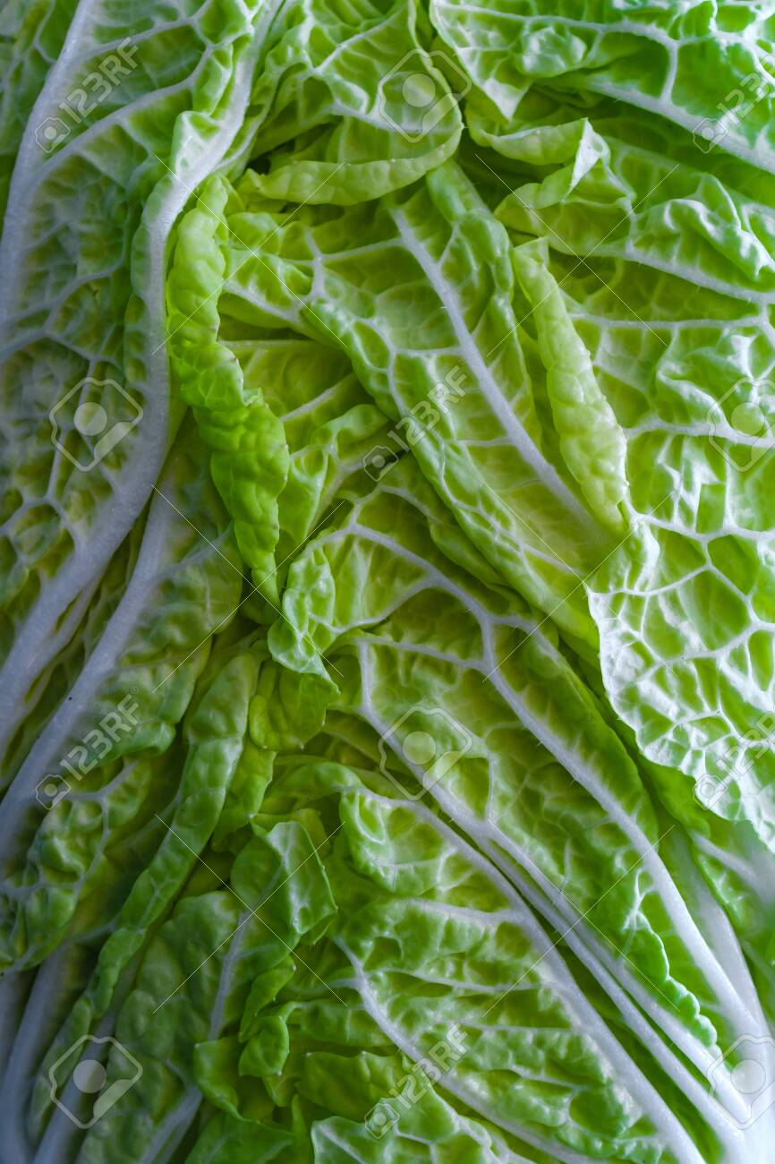 Leaf Of Fresh Chinese Cabbage Or Napa Cabbage Texture Stock Photo Picture And Royalty Free Image Image 146668778