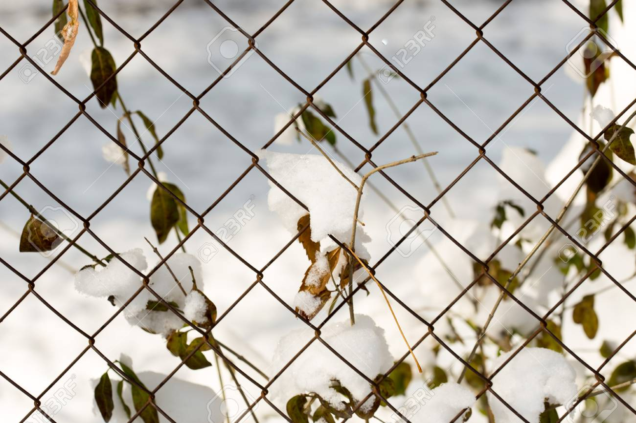 Wire Fence And Snow. Chain-link Fence. Wire Mesh Fence In The ...