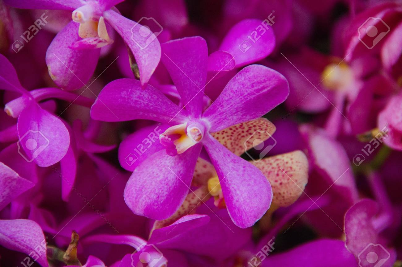 purple orchid Stock Photo - 13975350