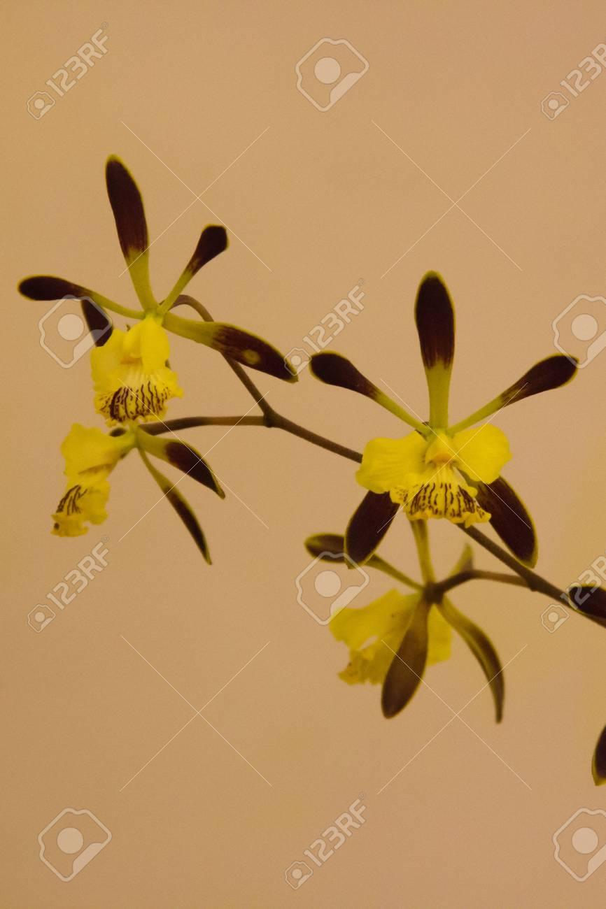 beautiful yellow orchid Stock Photo - 14012343