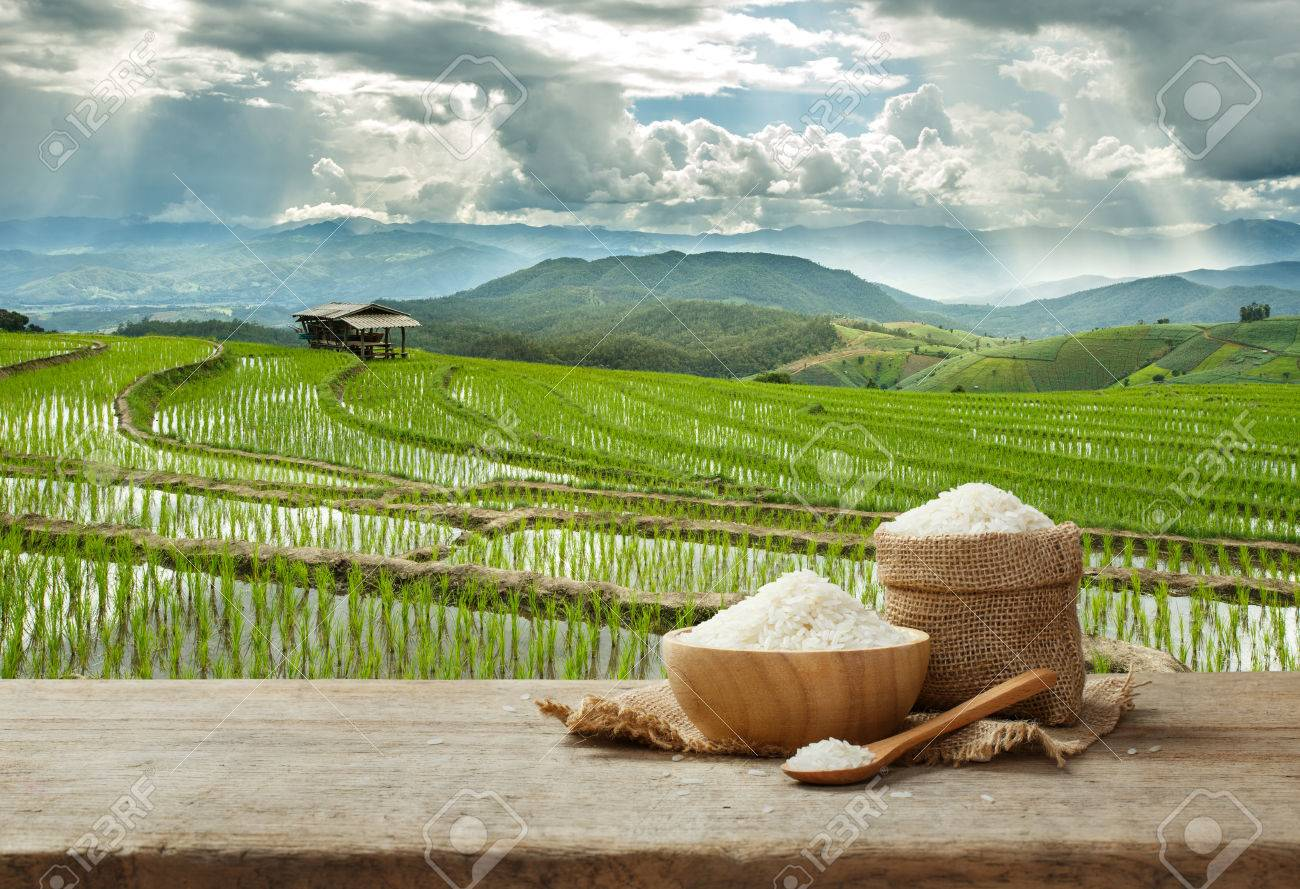 Asian white rice or uncooked white rice with the rice field background - 68128793