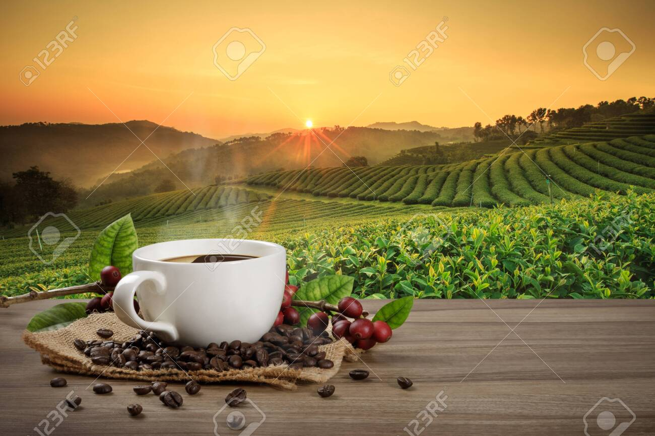 Hot coffee cup with fresh organic red coffee beans and coffee roasts on the wooden table and the plantation background with copy space for your text. - 124387174