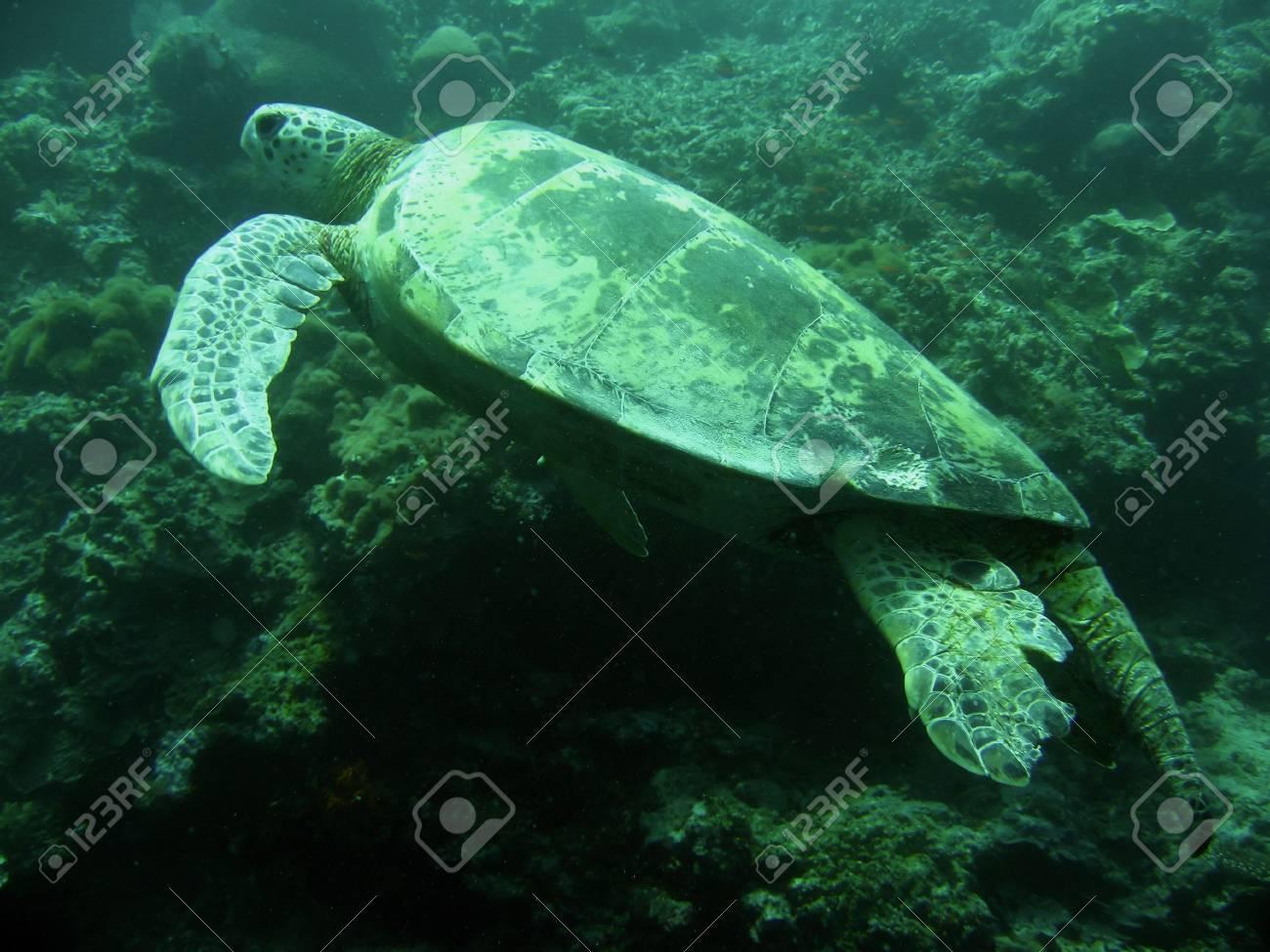 scuba diving sipadan in sabah borneo Stock Photo - 6579325