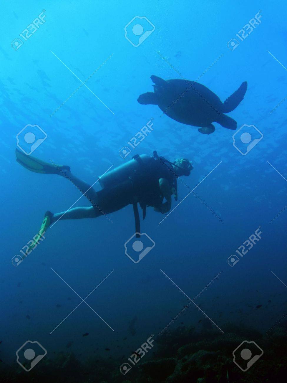 scuba diver and green sea turtle side by side sipadan in sabah borneo Stock Photo - 6579377