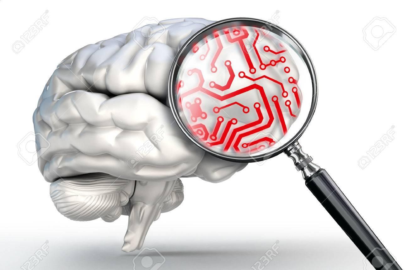 Rot Kreis Auf Lupe Und Menschlichen Gehirns Auf Weißem Hintergrund ...