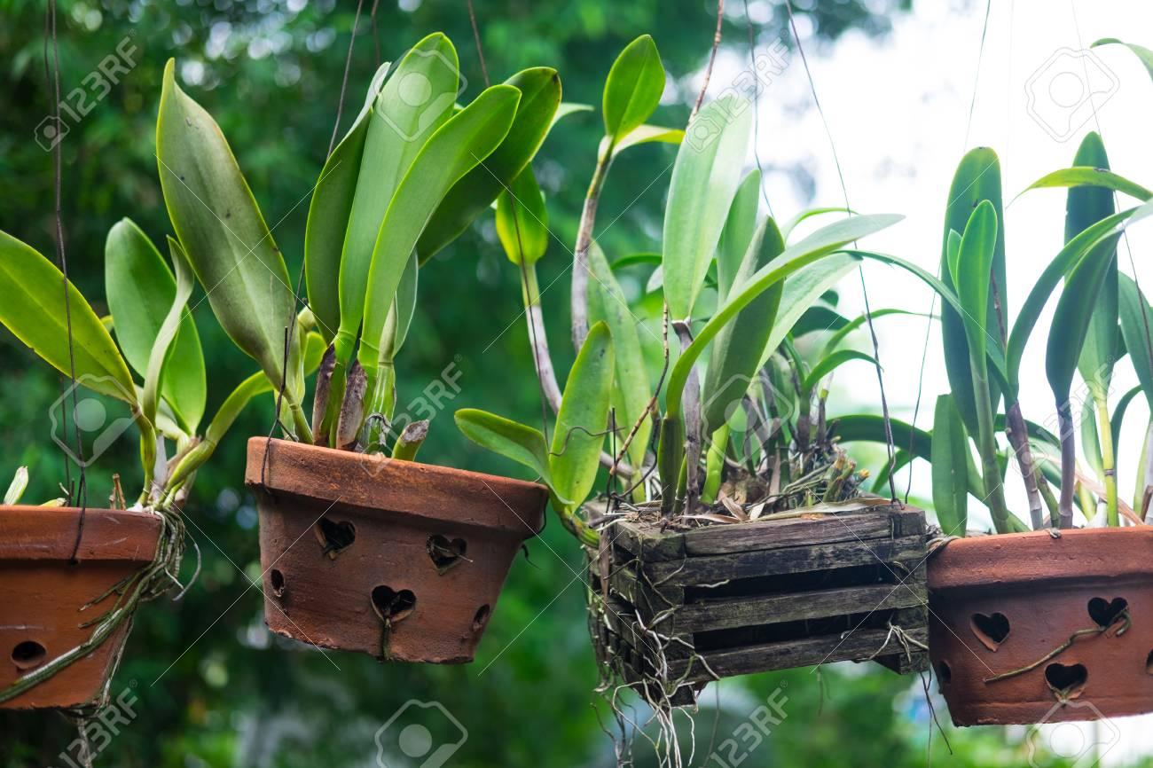 Grand Plan De Plante Verte Dans Pot Accrocher Decoration Dans Maison Banque D Images Et Photos Libres De Droits Image 87401355