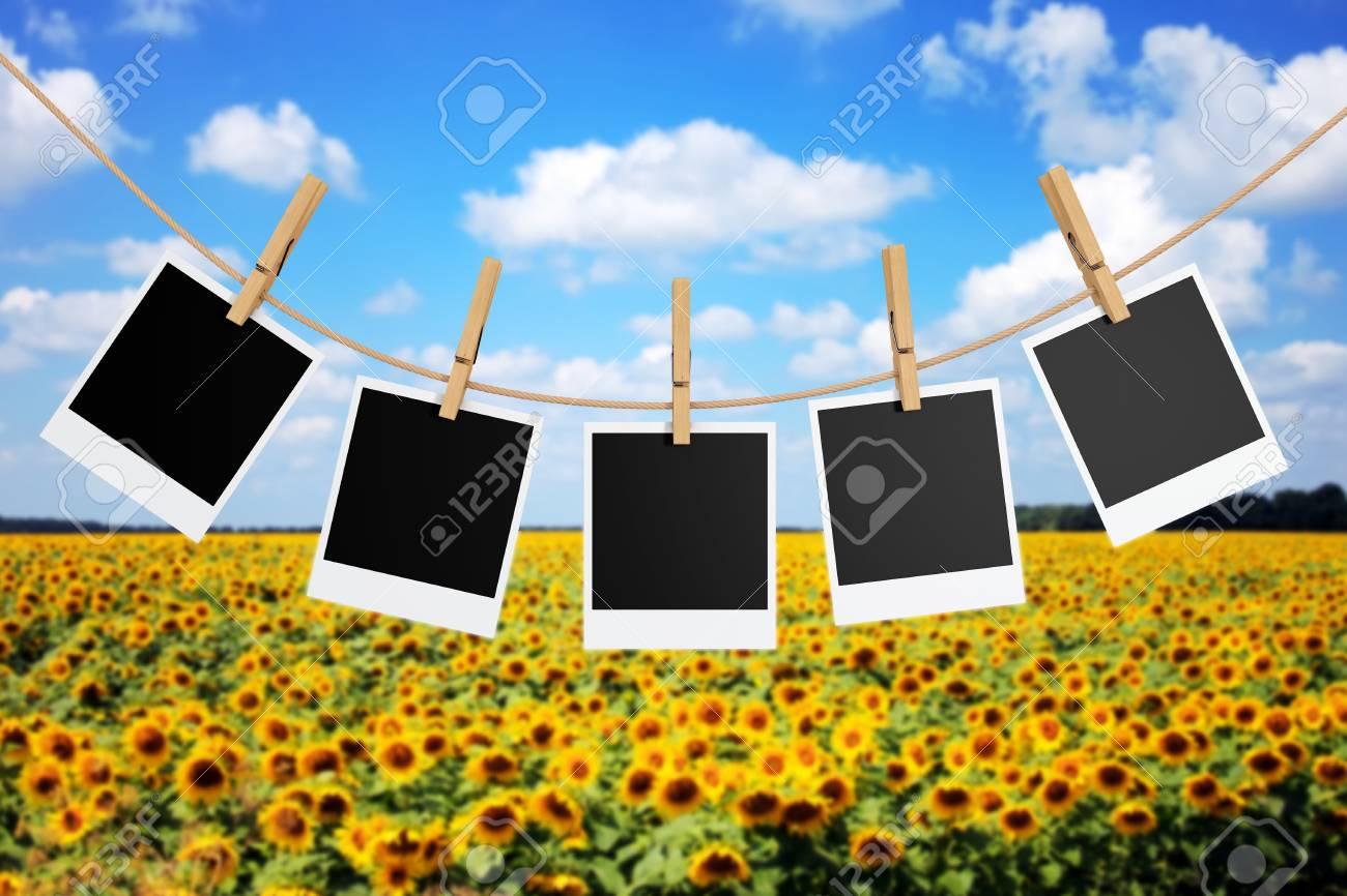 Fotorahmen Mit Wäscheklammern Vor Sonnenblumenfeld. 3D-Rendering ...
