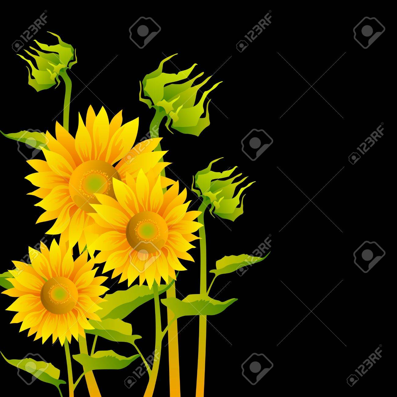 beautiful yellow Sunflowers on black background Stock Vector - 9159847