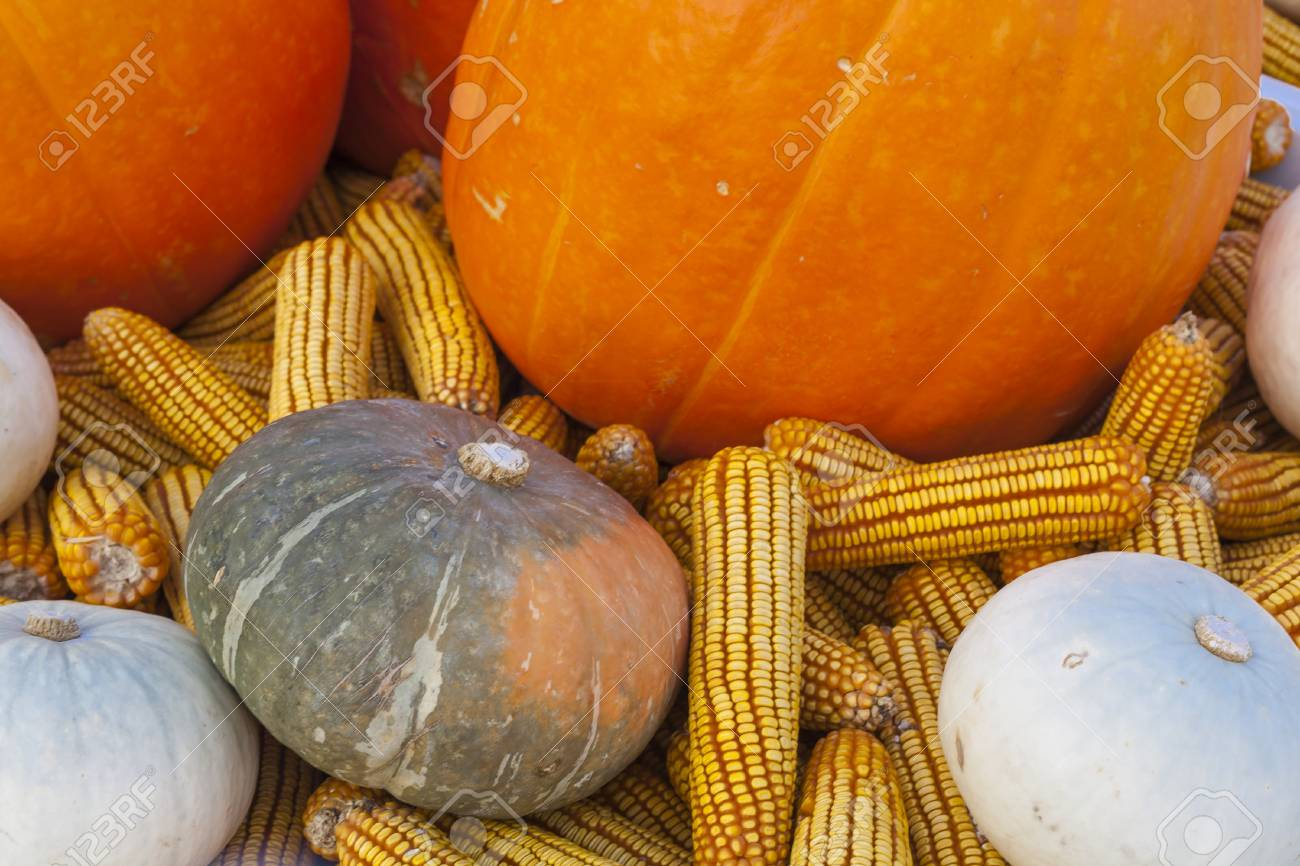 Pumpkin, corn, and other in the basket Stock Photo - 15502841