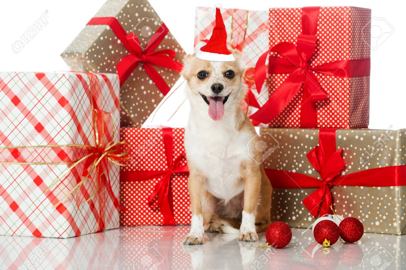 Dog With Christmas Gifts Isolated On White Stock Photo, Picture And ...