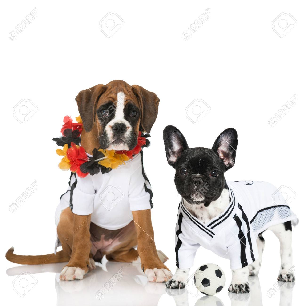 Puppies in football jersey isolated on white Stock Photo - 34736789 70e23ce95