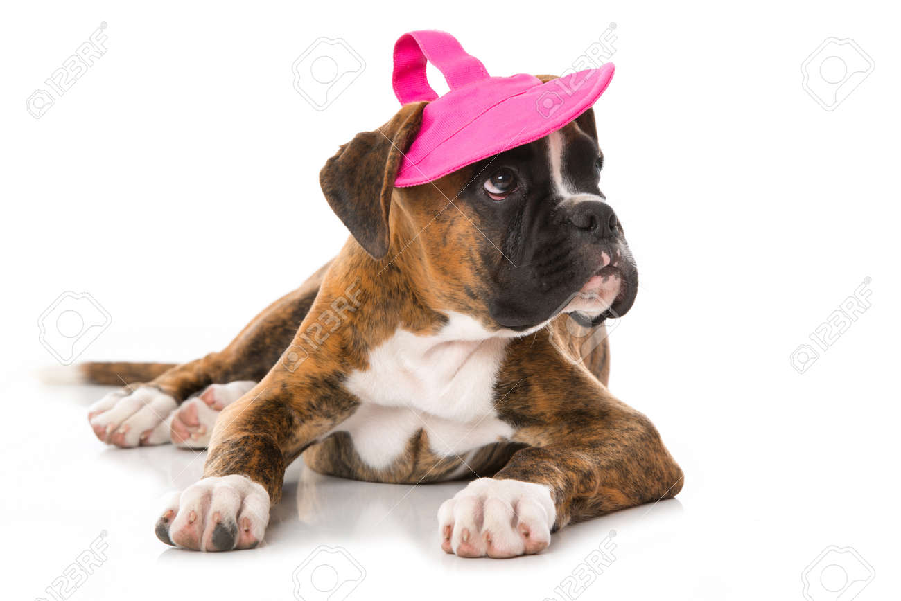 Boxer puppy with sun cap isolated on white - 167523469