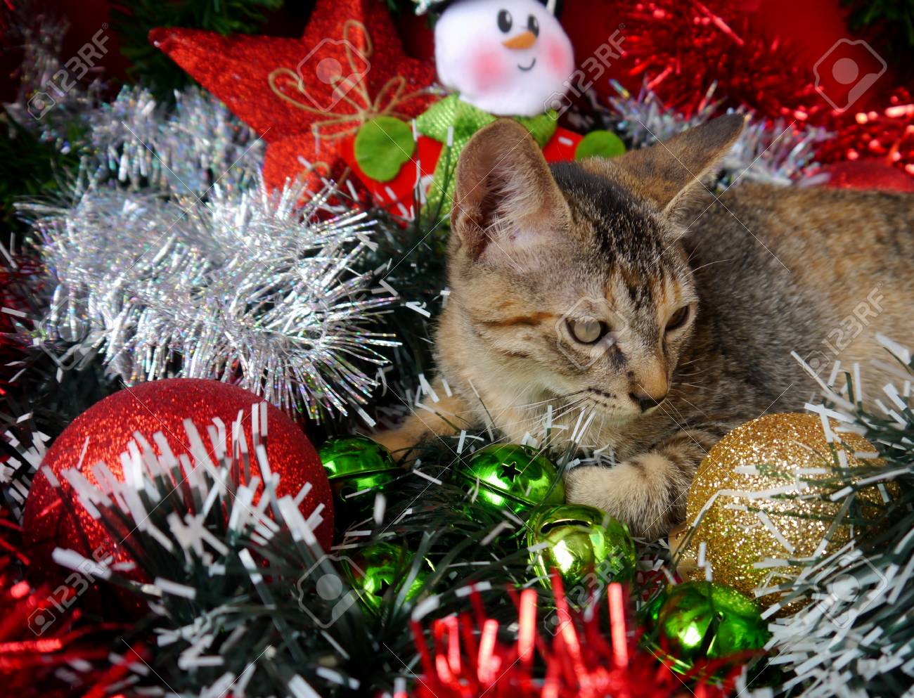 Merry Christmas And A Happy New Year Cards Decoration Sweet Baby ...