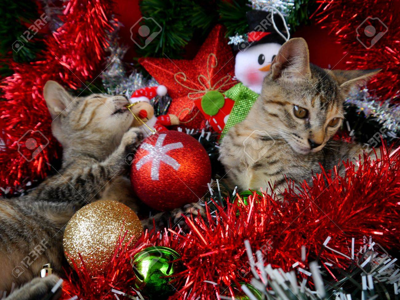 merry christmas and a happy new year cards decoration sweet baby cats stock photo 48405345