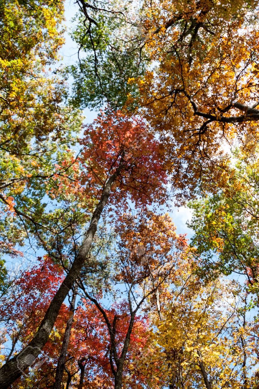 Fall Trees in North Carolina Stock Photo - 20365079