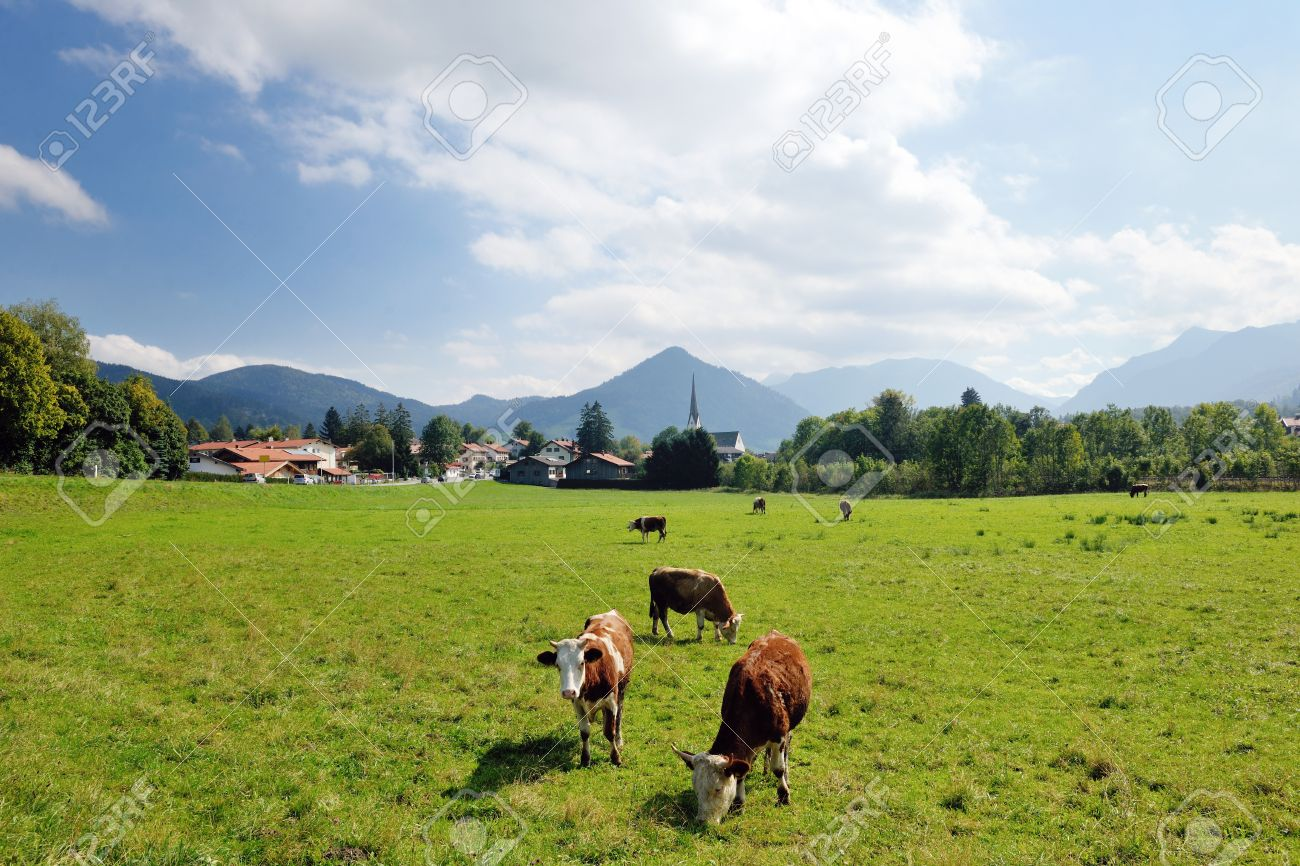 Cow Farm Animal And Field Of Fresh Grass In Countryside Background Stock Photo