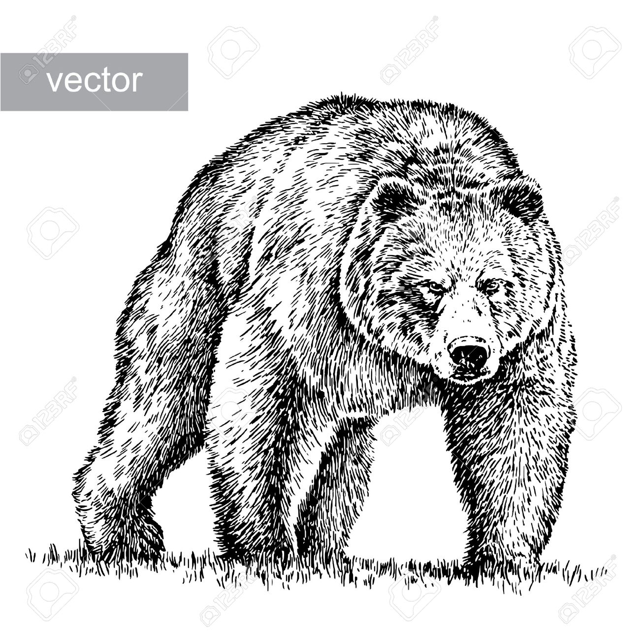 8 365 grizzly bear cliparts stock vector and royalty free grizzly rh 123rf com polar bear clipart black and white polar bear clipart black and white