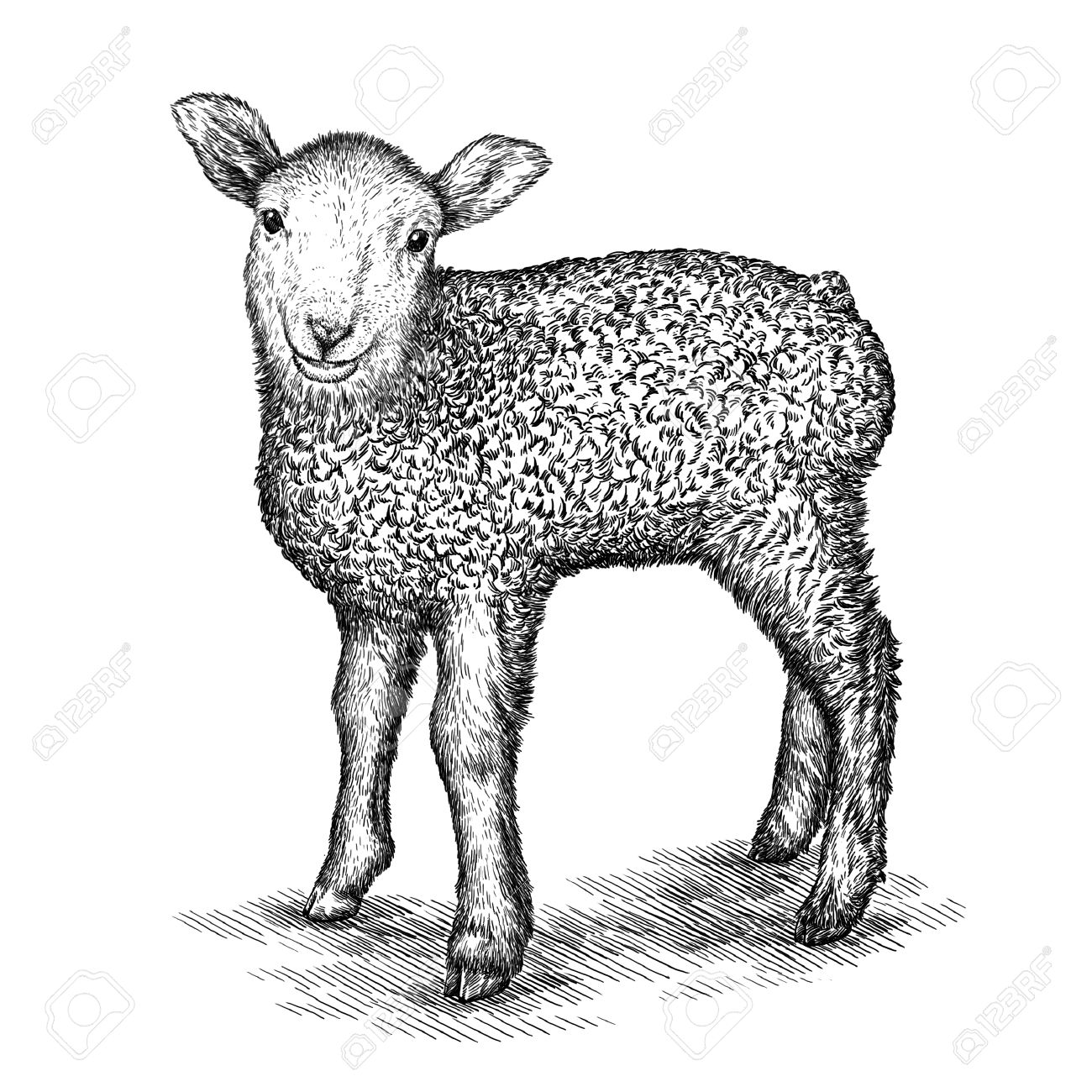 engrave isolated sheep illustration sketch linear art stock photo 46494370