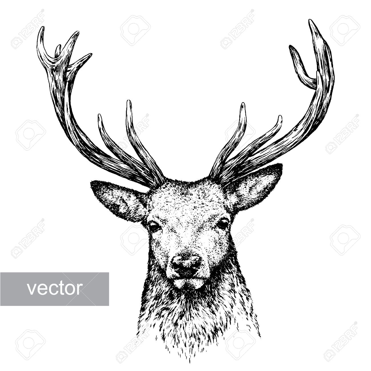 Engrave isolated deer vector illustration sketch linear art stock vector 46498388