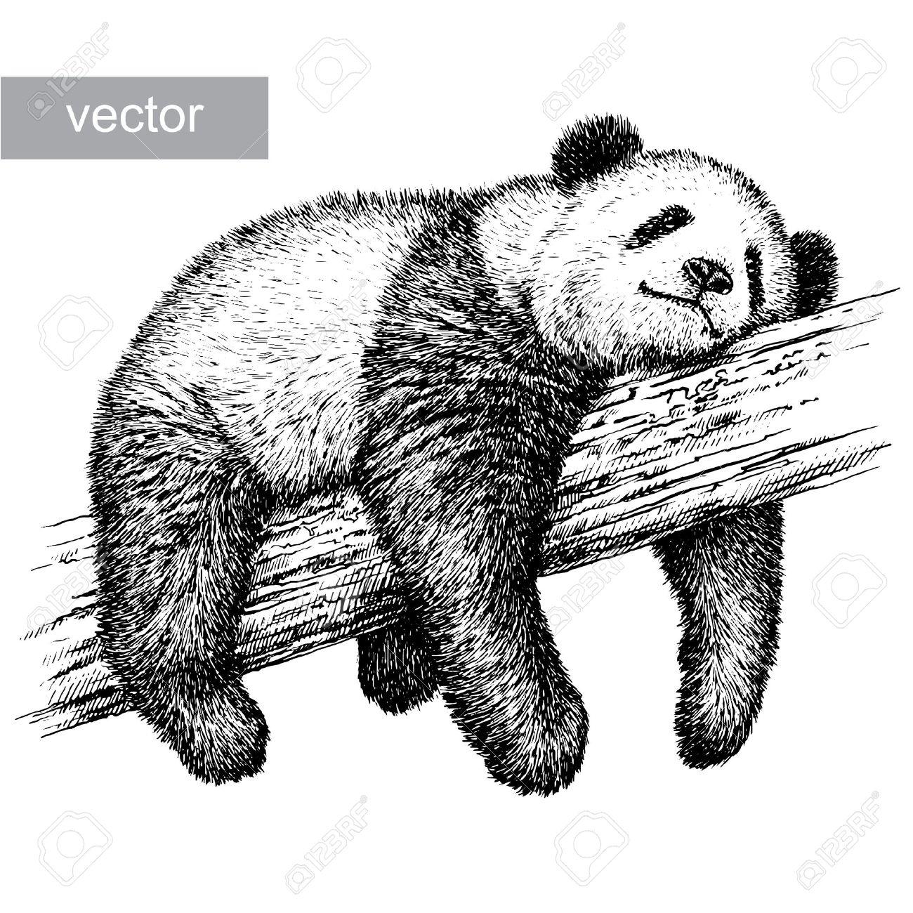 engrave isolated panda bear vector illustration sketch. linear art - 46498414