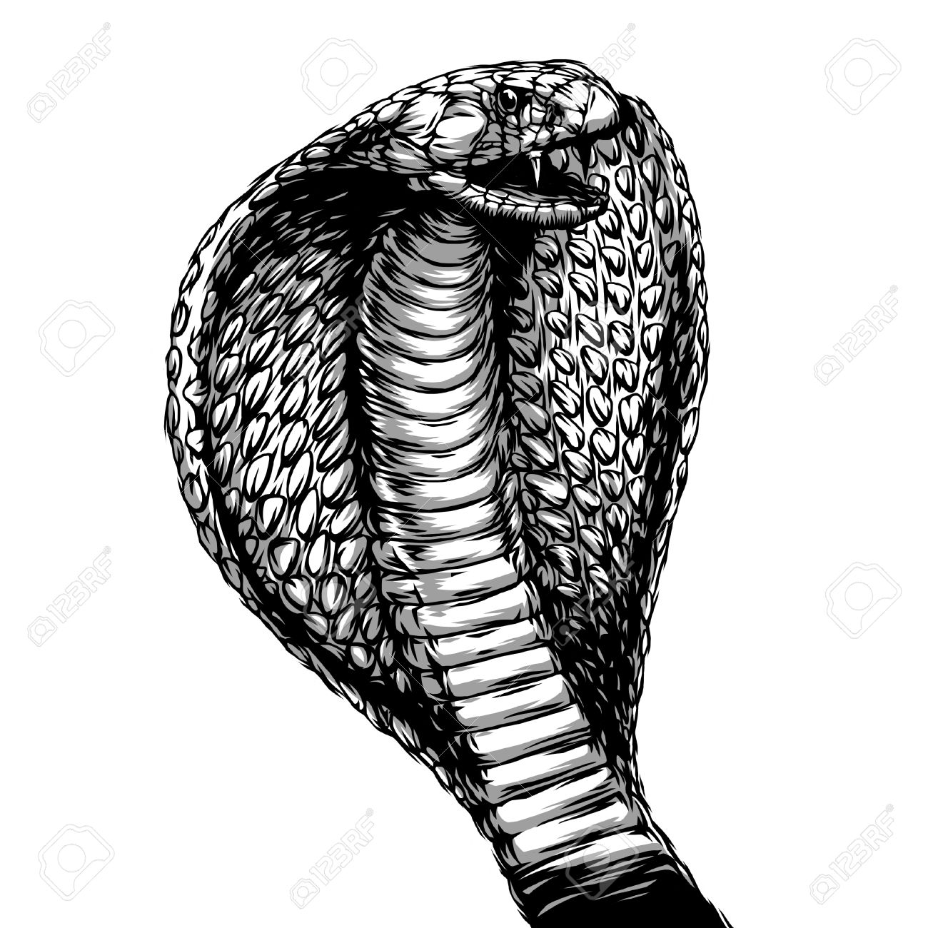 388 king cobra stock illustrations cliparts and royalty free king