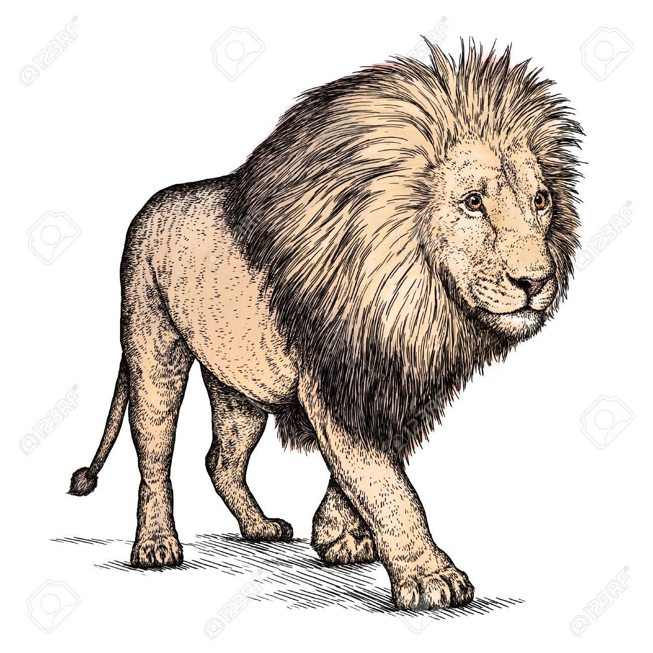 孤立したライオン イラスト スケッチを刻みます線形の芸術 の写真素材