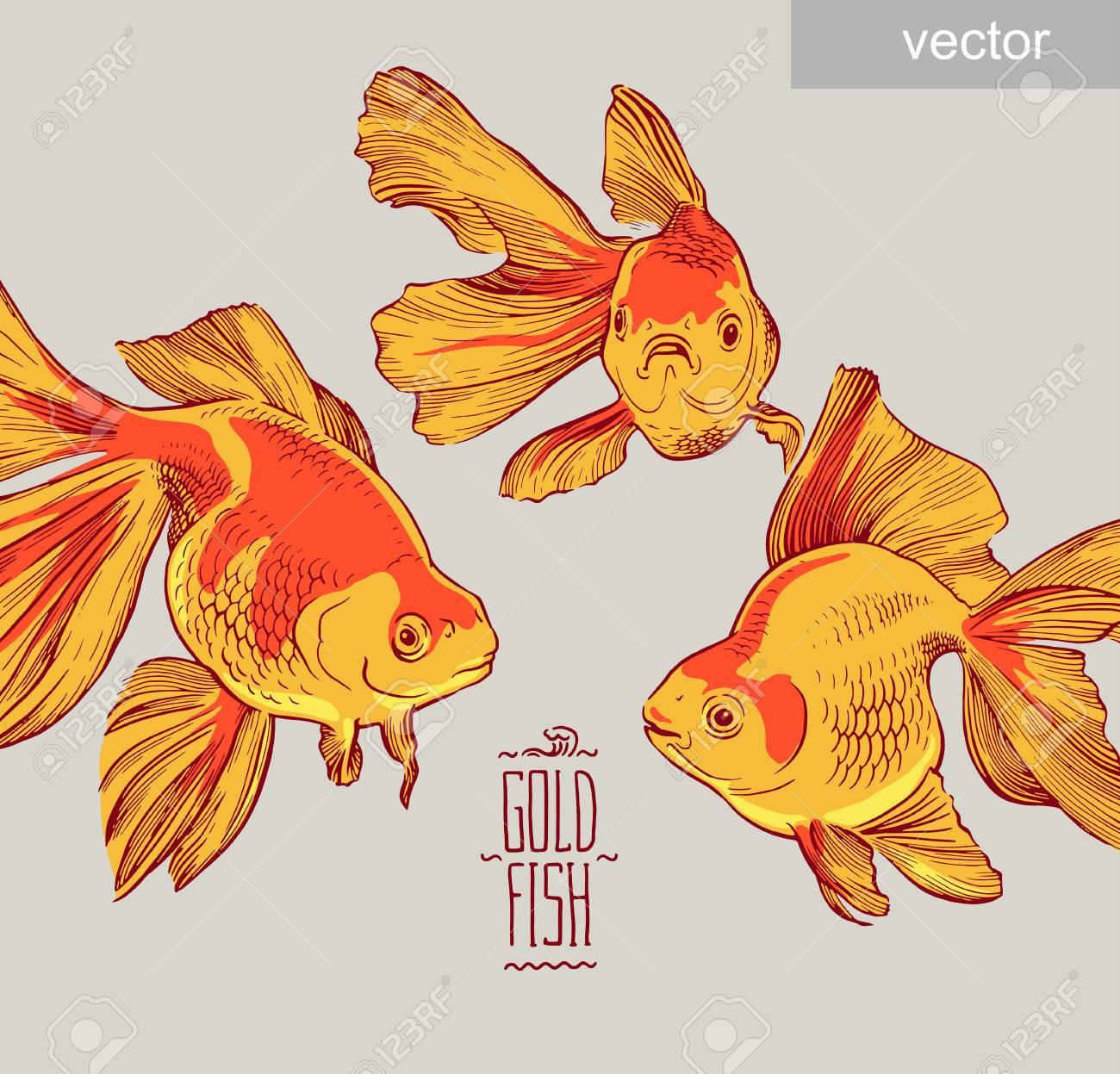 金魚イラスト作品ライン水中色野生動物のイラスト素材ベクタ Image