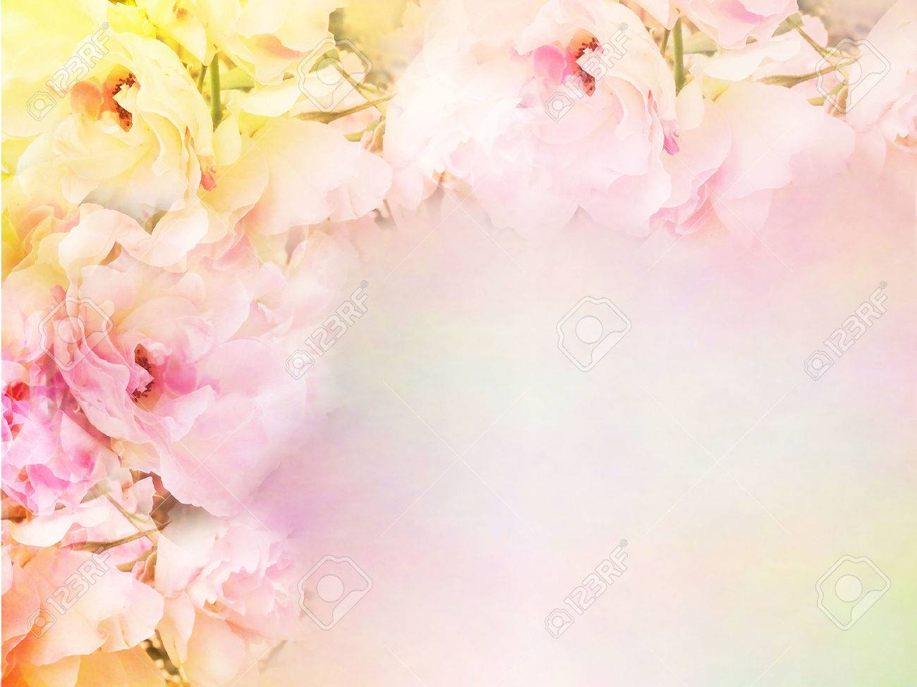 Beautiful Rose Flowers Border Vintage Color Filters Roses Flower