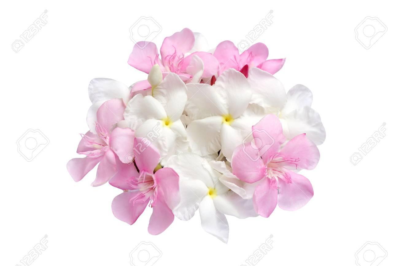 Rosa Und Weisse Blumenstrauss Isoliert Auf Weissem Hintergrund