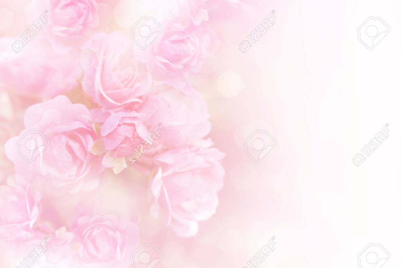 Soft Pink Roses Flower Vintage Background With Copy Space Stock Photo