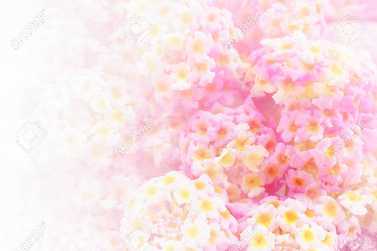 Soft Pink Floral Background With Empty Space For Text Stock Photo