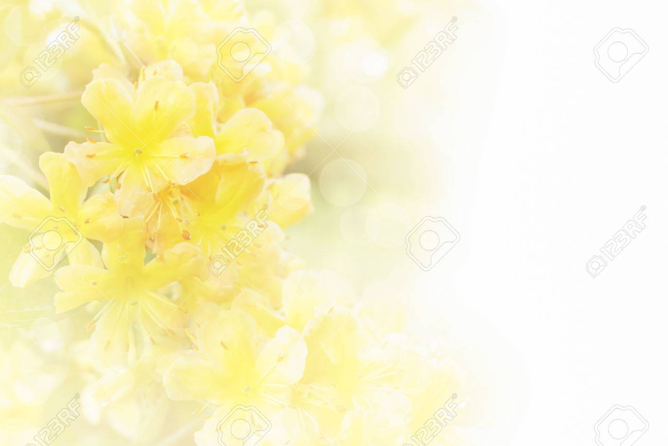 soft background of yellow flower with bokeh and copy space stock photo picture and royalty free image image 83823816 soft background of yellow flower with bokeh and copy space
