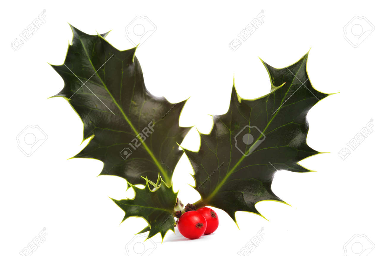 Holly and red berries, isolated Stock Photo - 275766