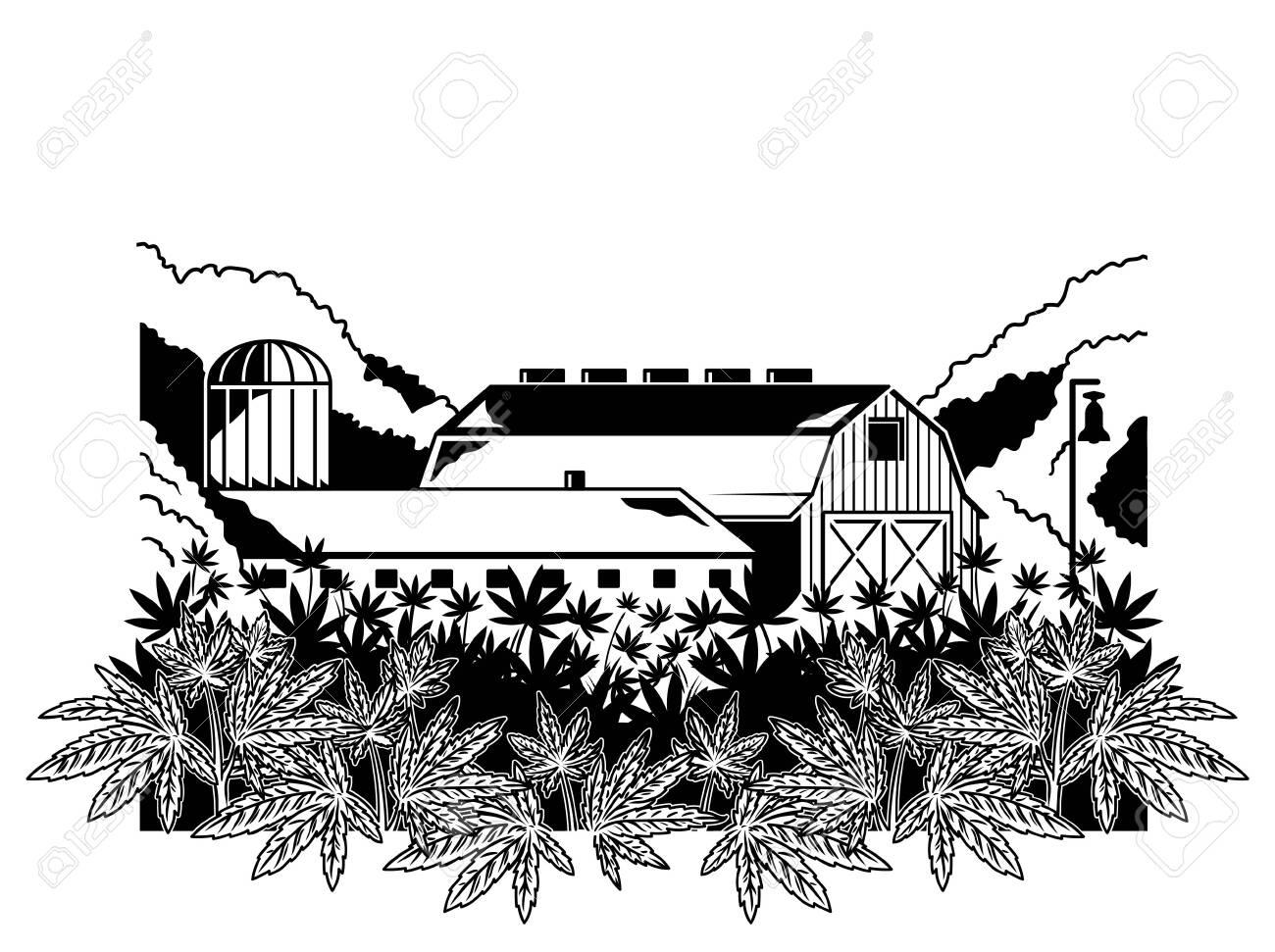 Big Cannabis Farm Plantation Of Marijuana Natural Product From Royalty Free Cliparts Vectors And Stock Illustration Image 127836544