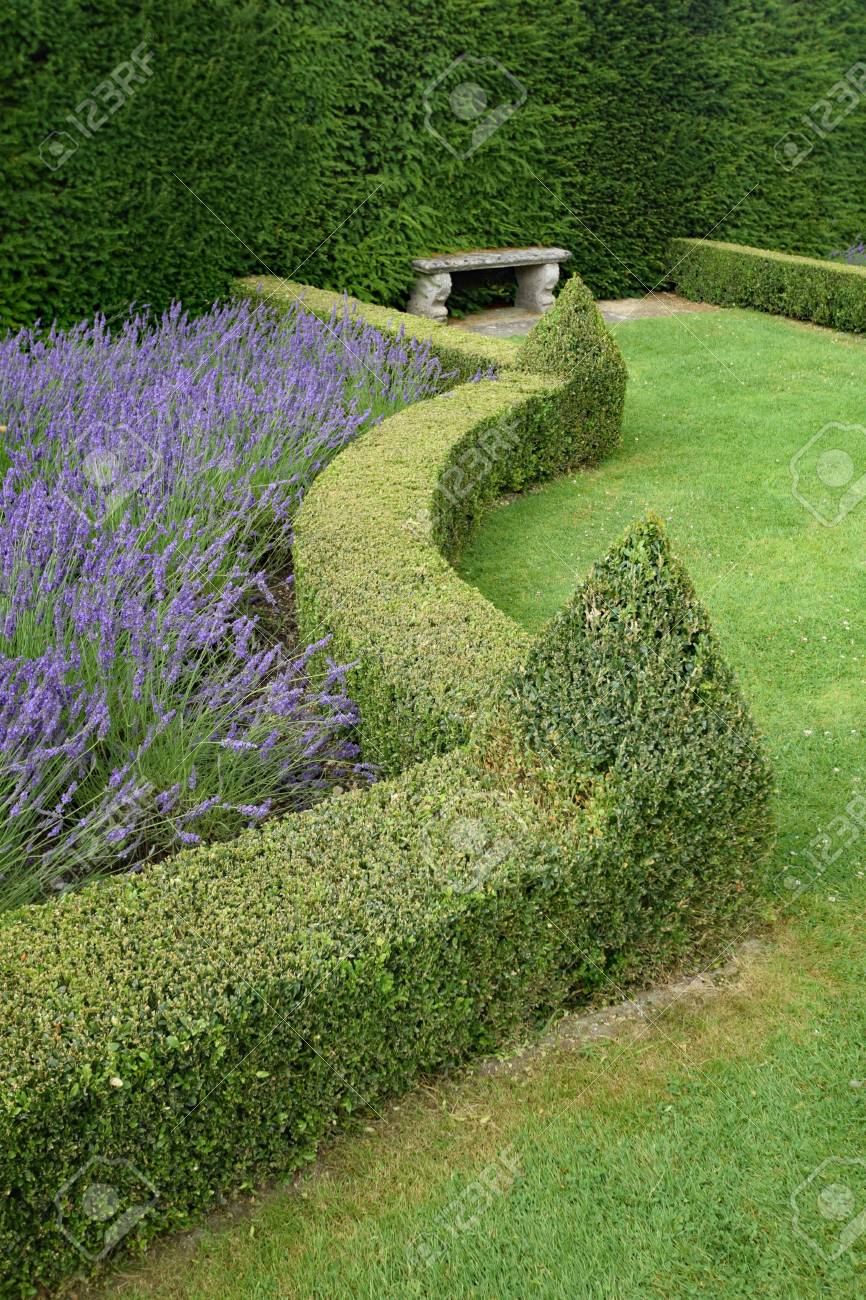 A Beautiful Manicured English Garden With Lawn Lavender And Stock Photo Picture And Royalty Free Image Image 76745543
