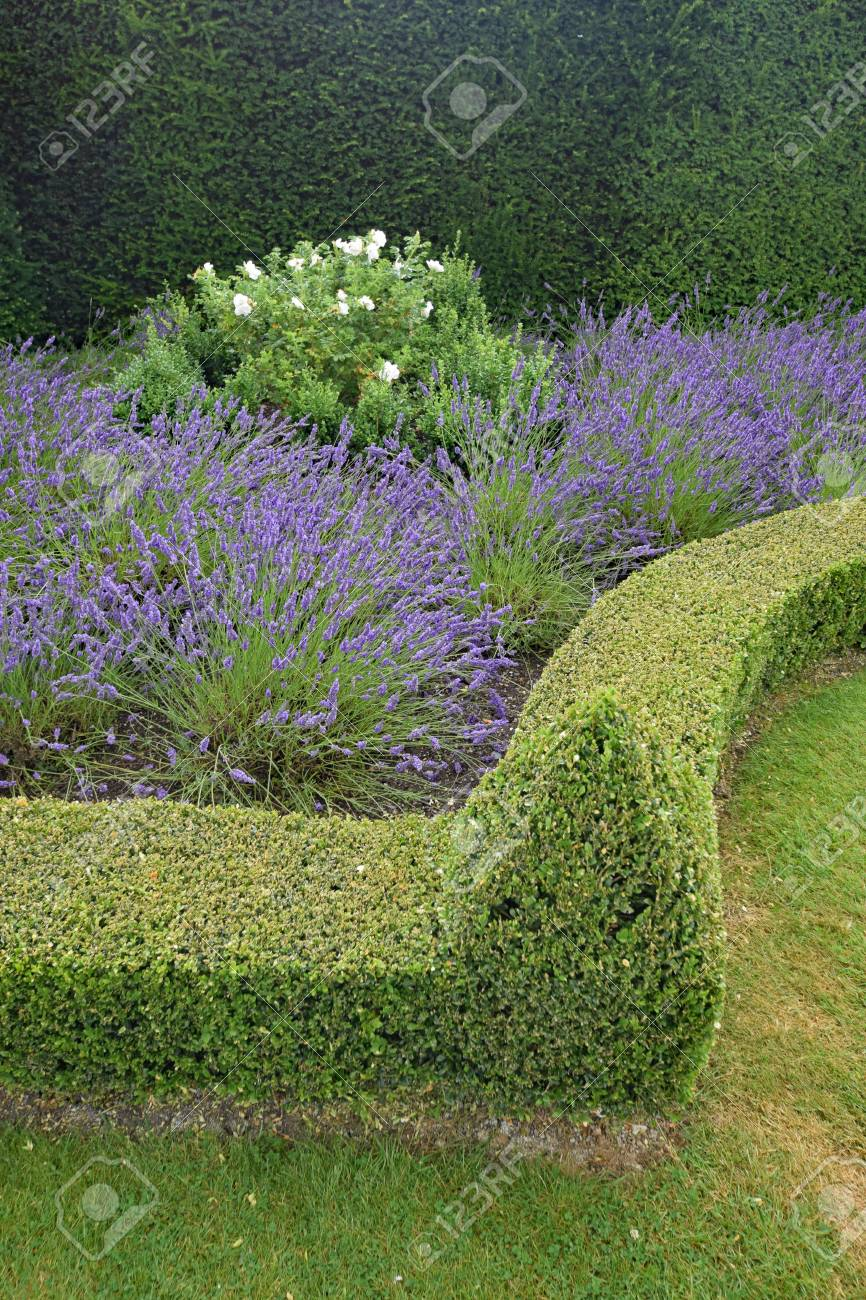 A Beautiful Manicured English Garden With Lawn Lavender And Stock Photo Picture And Royalty Free Image Image 76820036